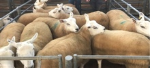 Sheep Breeding Sale 14th September 2020
